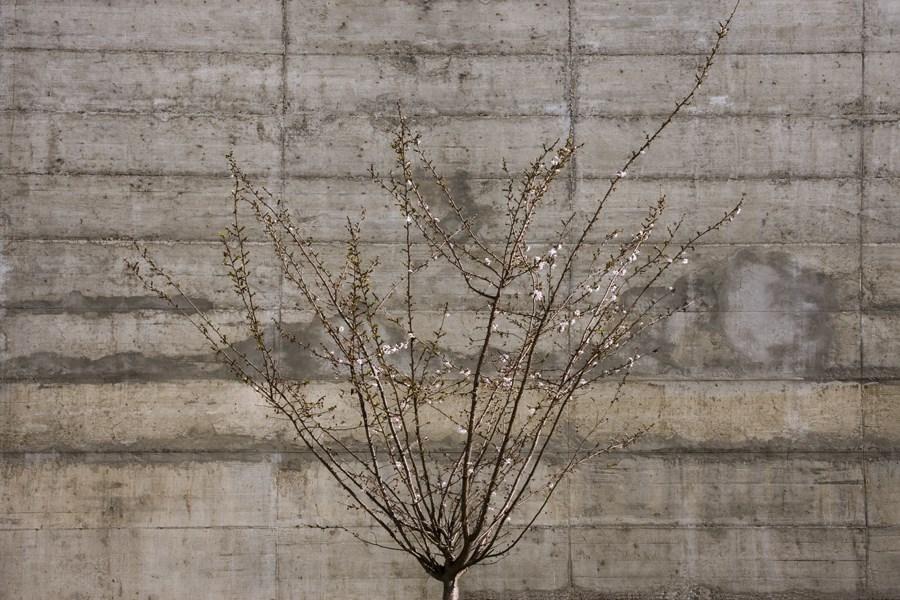 Caroljobe - Arquitectura creativa Barcelona edificio Poblenou pared