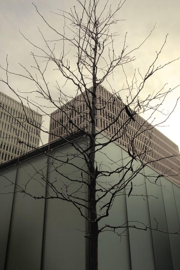 Caroljobe - Arquitectura creativa Barcelona edificio Cuidad de la Justicia con árbol
